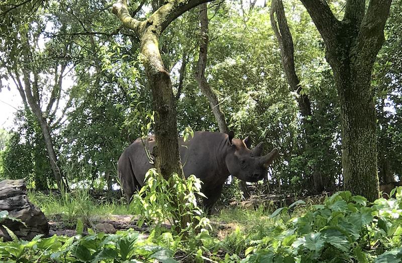Animal Kingdom rinoceronte