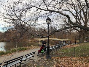 Central Park Ponte