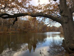 Central Park laghetto