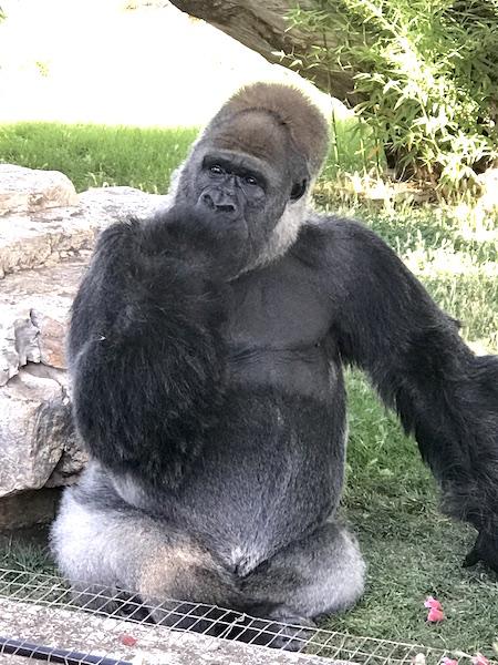 Zoo Safari Fasano Orango